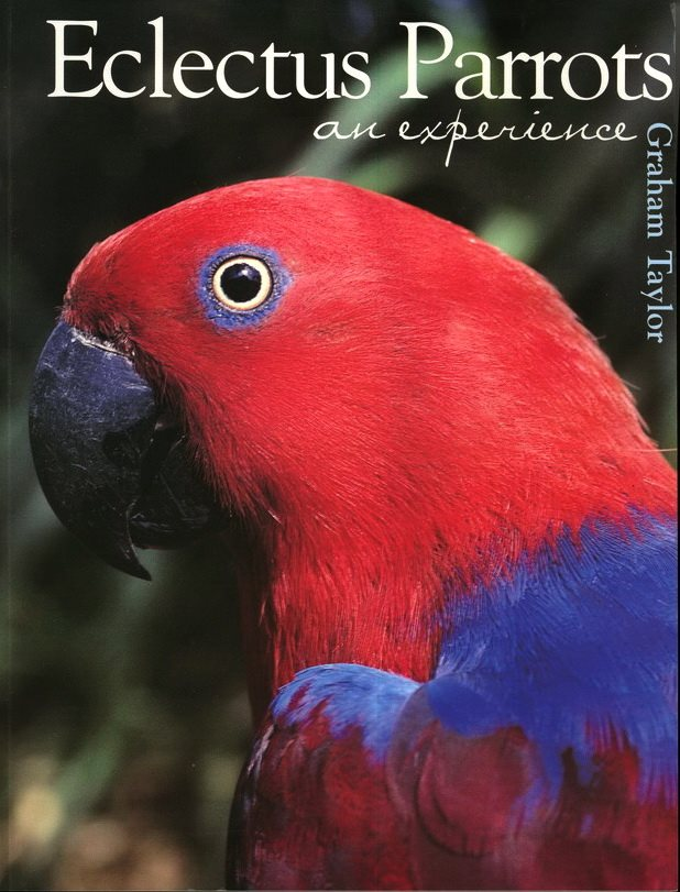 Eclectus Parrots An Experience